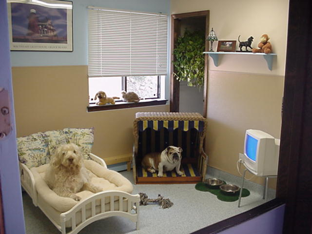 Dogs in a Small Room