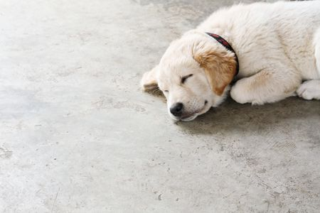 Concrete Floor Dog