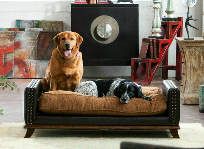 Dogs in Home